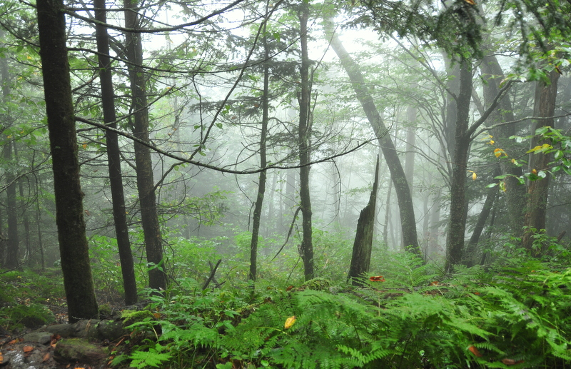 A humid forest in SMNP on the Appalachian Trail