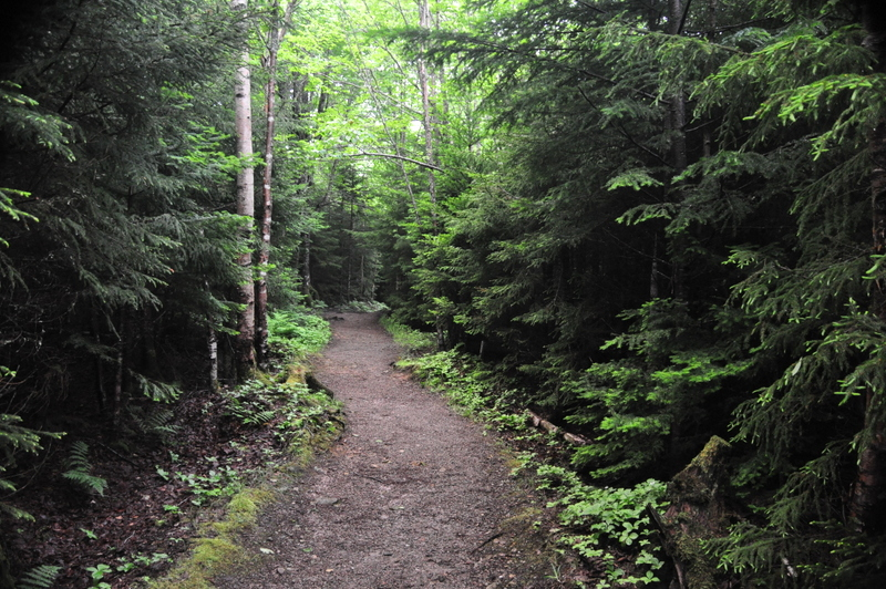 A Serene Forest Trail in Fundy National Park, New Brunswick, CAN